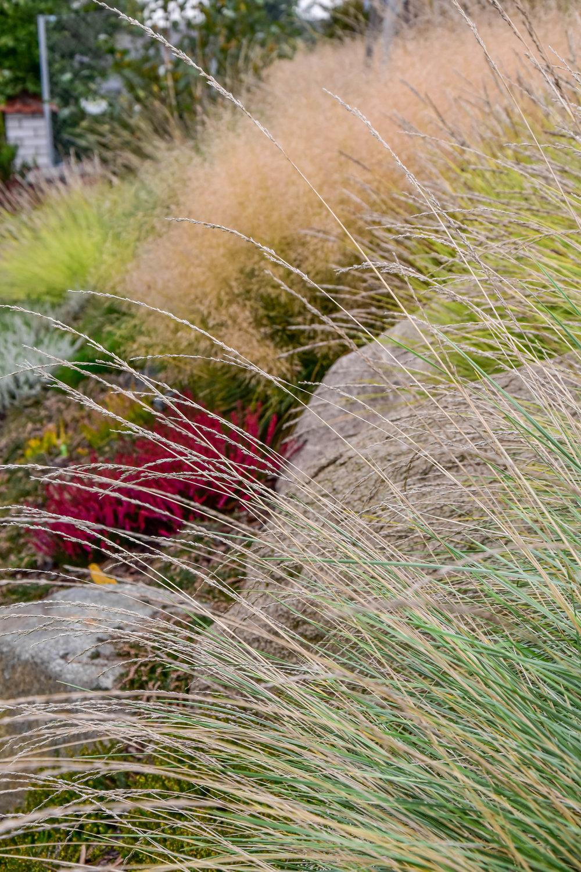 zahrada_kontrastu (8).jpg