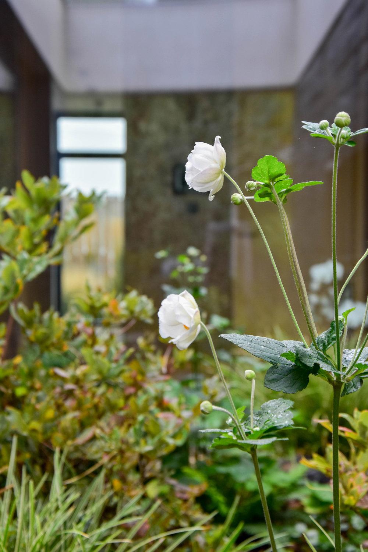 zahrada_kontrastu (15).jpg