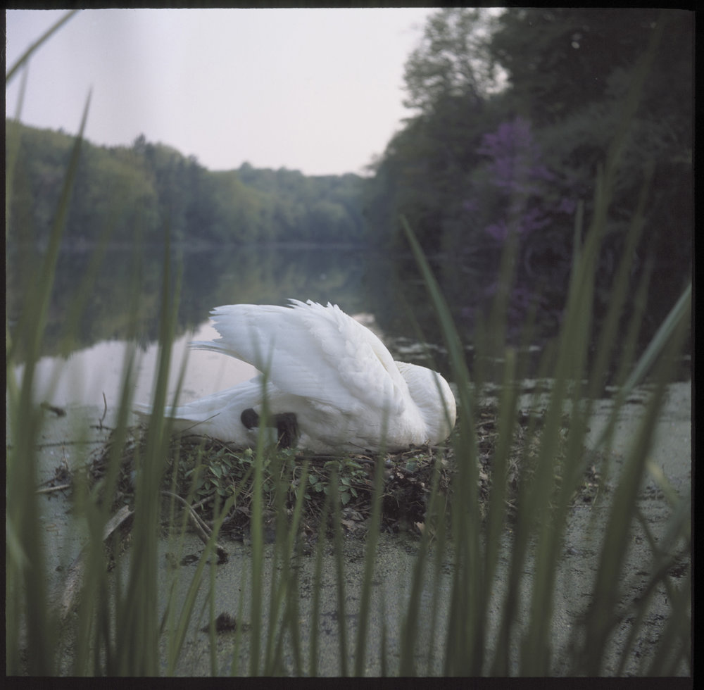 2008, 120 Color Negative Film