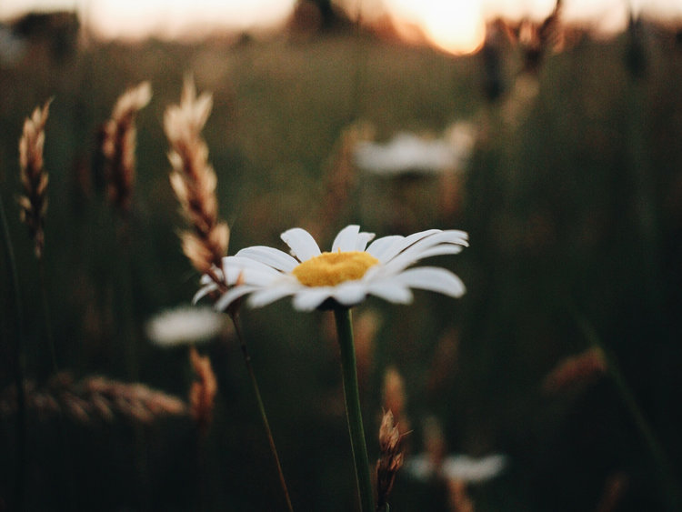 Spiritual Emergence — Awaken in the Dream