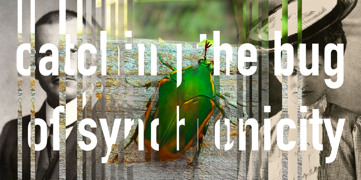 Catching the bug of synchronicity awaken in the dream catching the bug of synchronicity buycottarizona