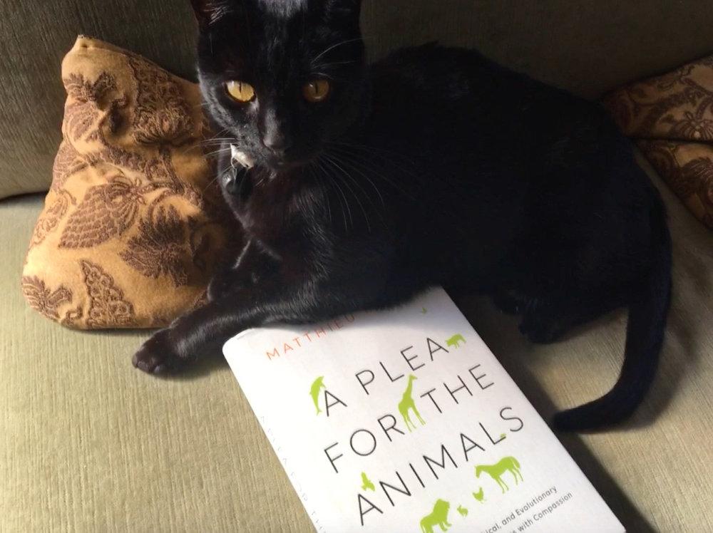 Social Media post: A PLEA FOR THE ANIMALS