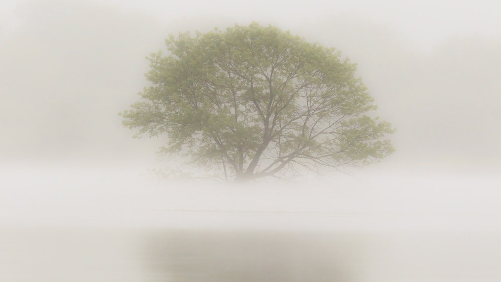 Tree in fog covered Wabash River floodwaters, Terre Haute, Indiana. Photo by Marty Jones