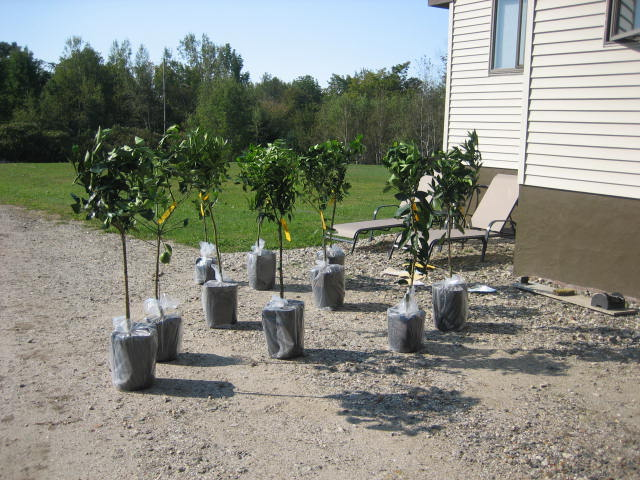 Arrival of trees in mid-September 2012.
