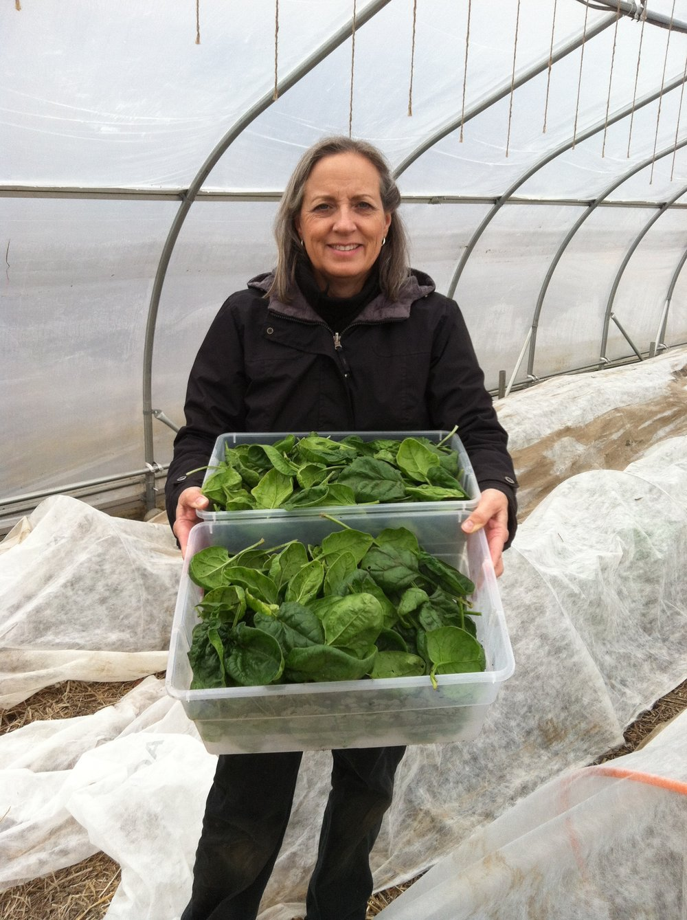 Carol with first winter spinach harvest.