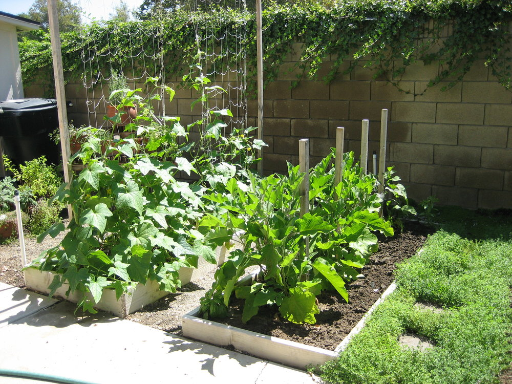 ca-garden-2.jpg