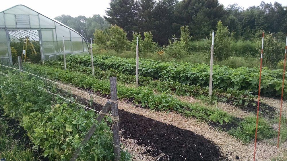 2015-garden-1.jpg