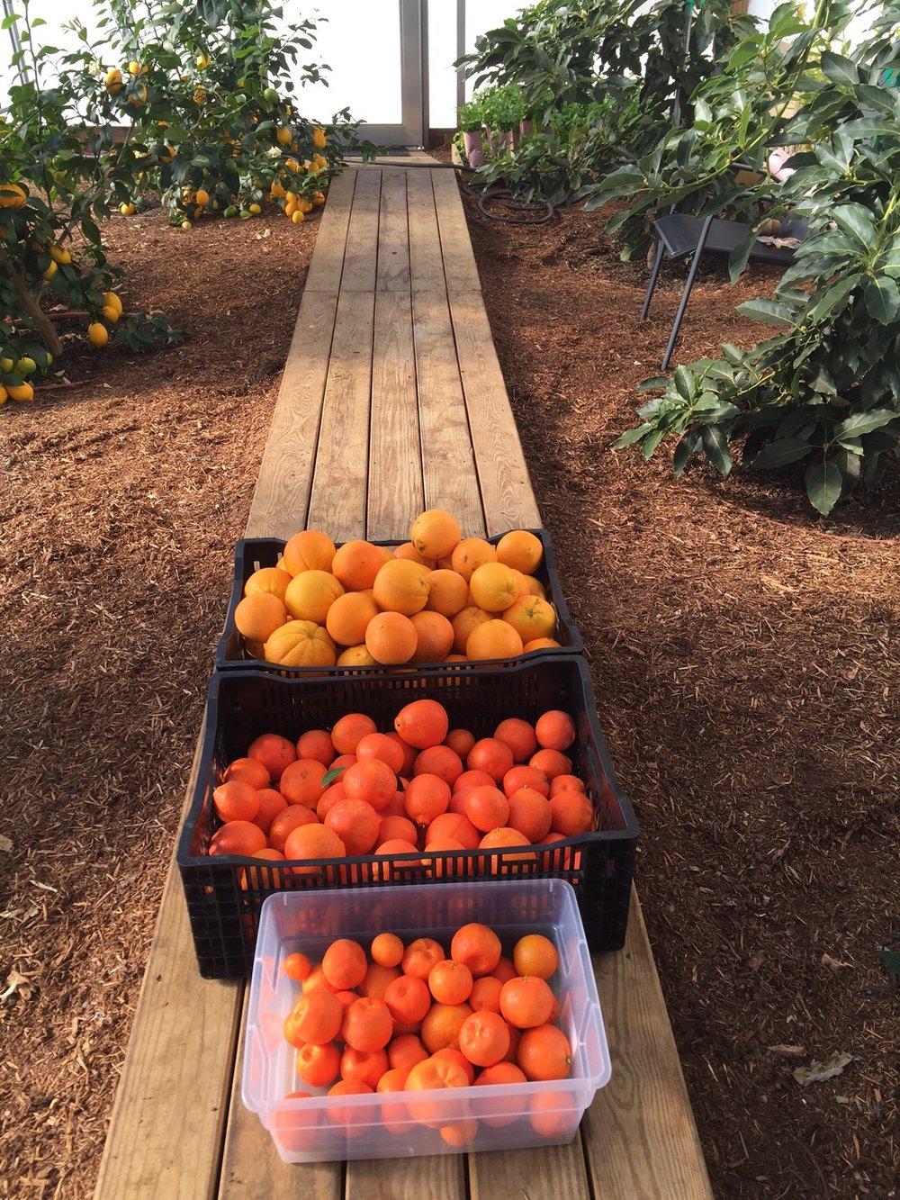 citrus4.jpg