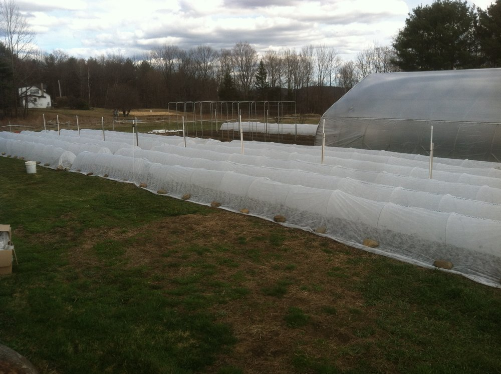 Spring crops finally planted, protected by row cover, before Mother's Day snowfall.