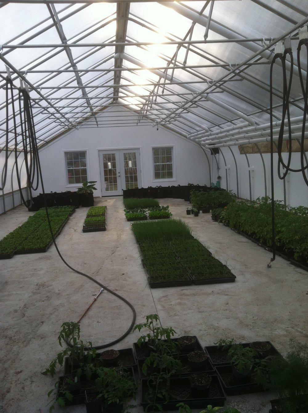 Seedlings in new greenhouse.