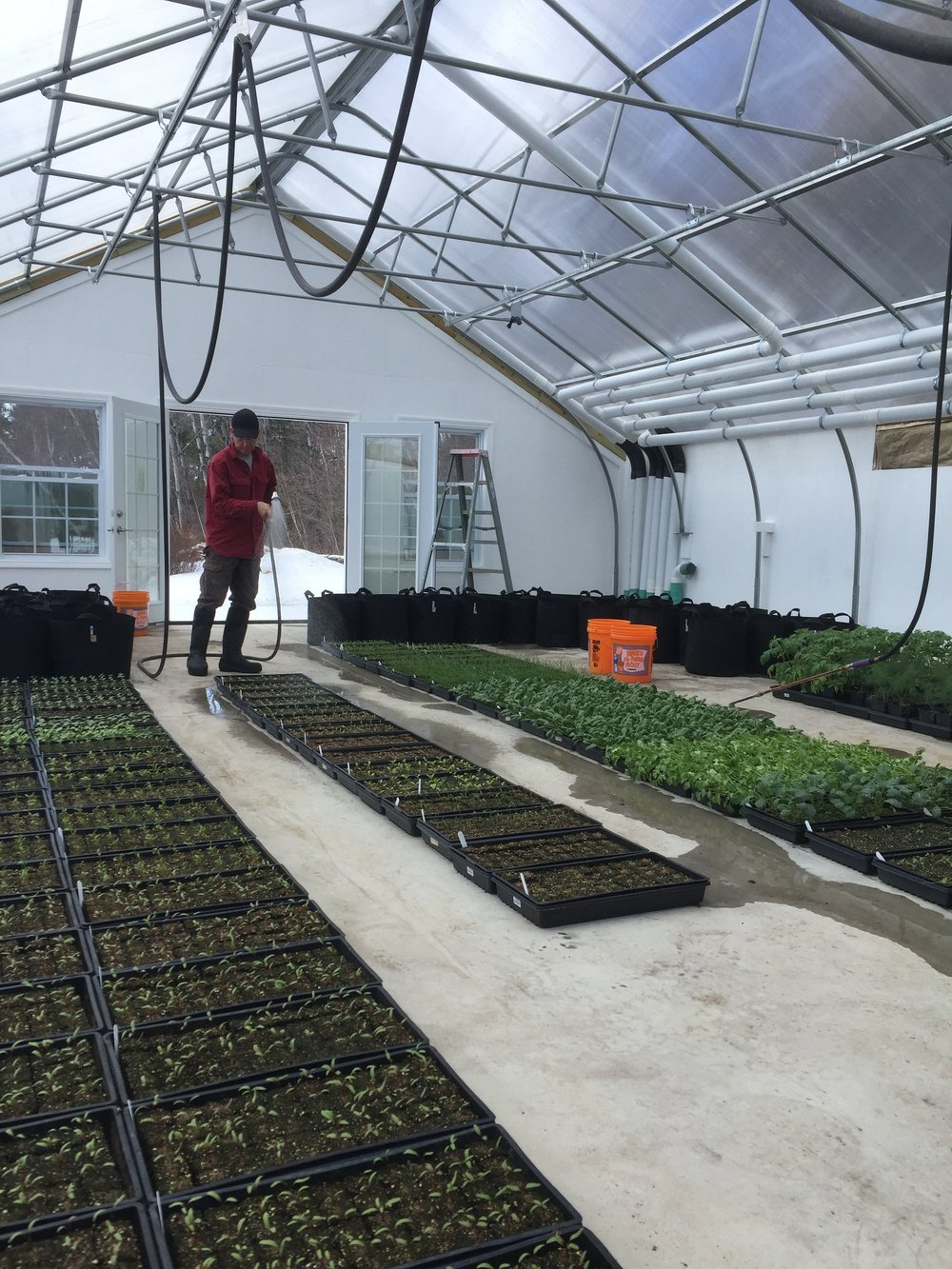 Watering seedlings.