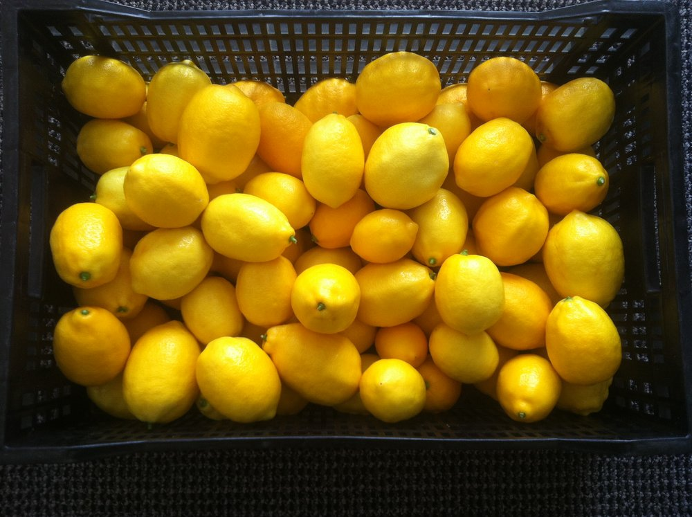 Some of our Meyer lemons.