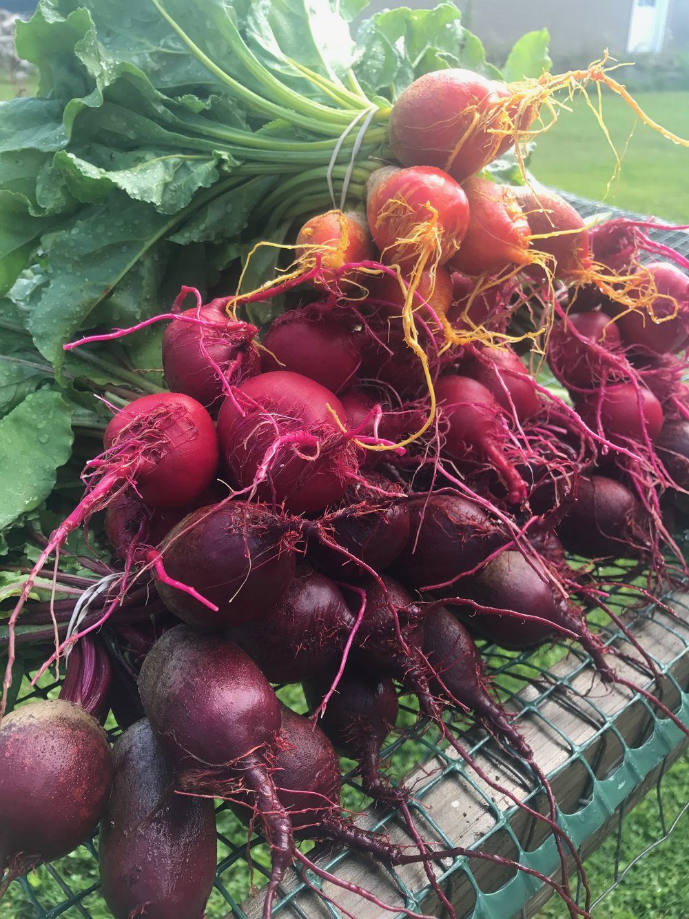 Beets from our garden