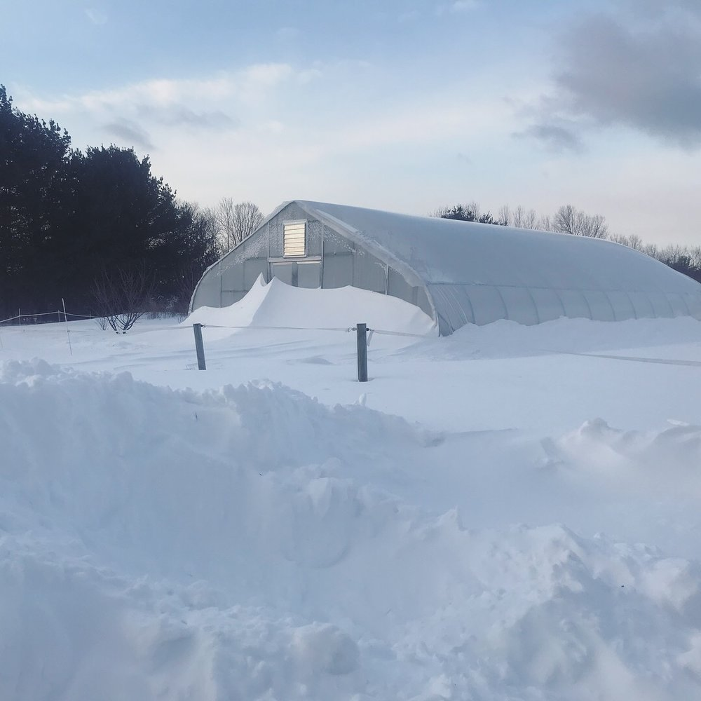 "The rolling greenhouse after  winter storm Grayson , the so-called  ""bomb cyclone.""     We got 12"" of snow.  The high winds kept the greenhouses clear of a heavy load of snow, but left high drifts on the downwind sides."