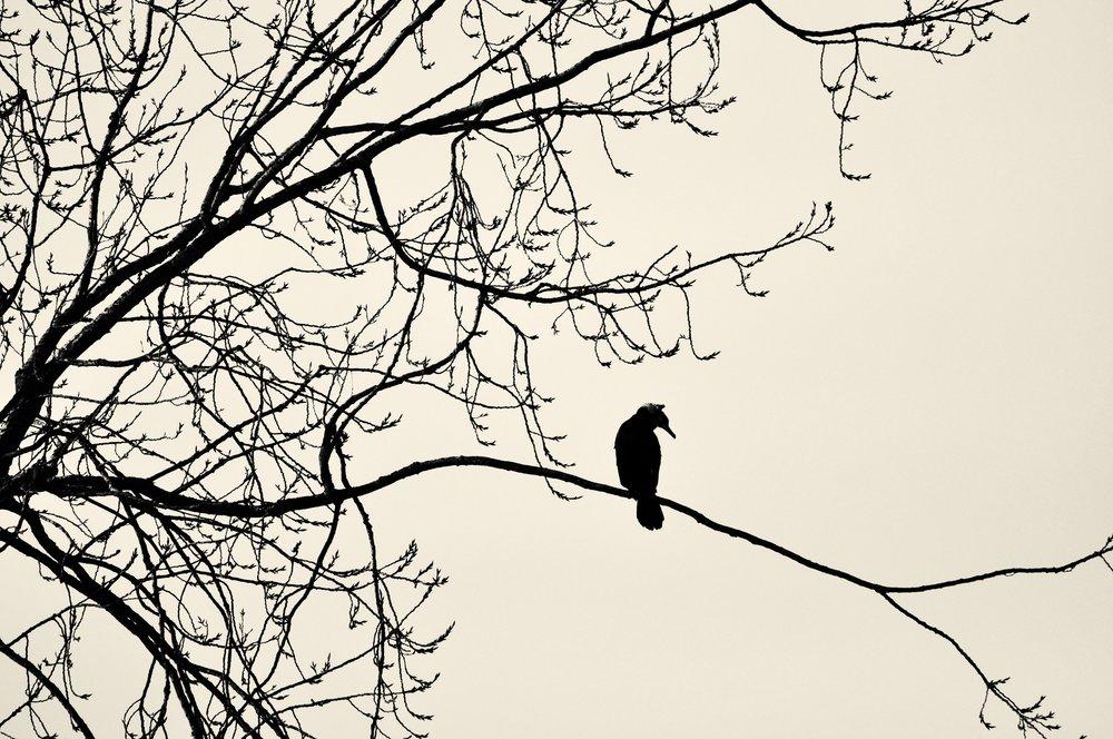 great-cormorant-3202500.jpg