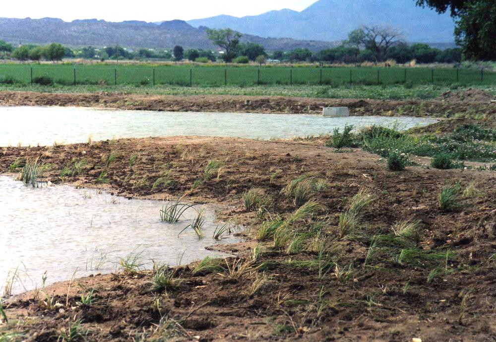 wetland planting.jpg