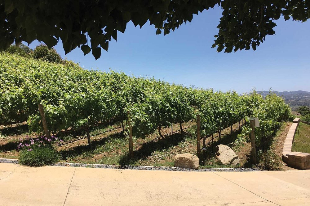 vineyard-rows.jpg
