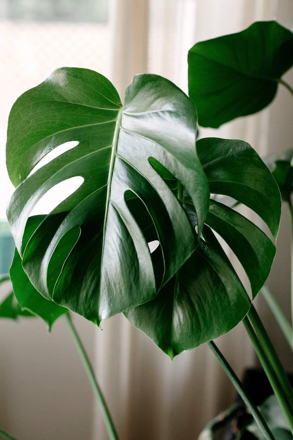 006-plant--plant-addict--blogger--interior-blogger--interio--home-blogger--lifestyle--lifestlye-blogger--tropical--urban-jungle.jpg