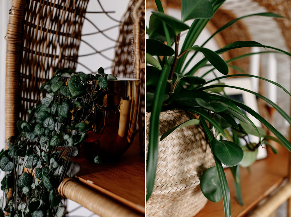 026-plant--plant-addict--blogger--interior-blogger--interio--home-blogger--lifestyle--lifestlye-blogger--tropical--urban-jungle.jpg