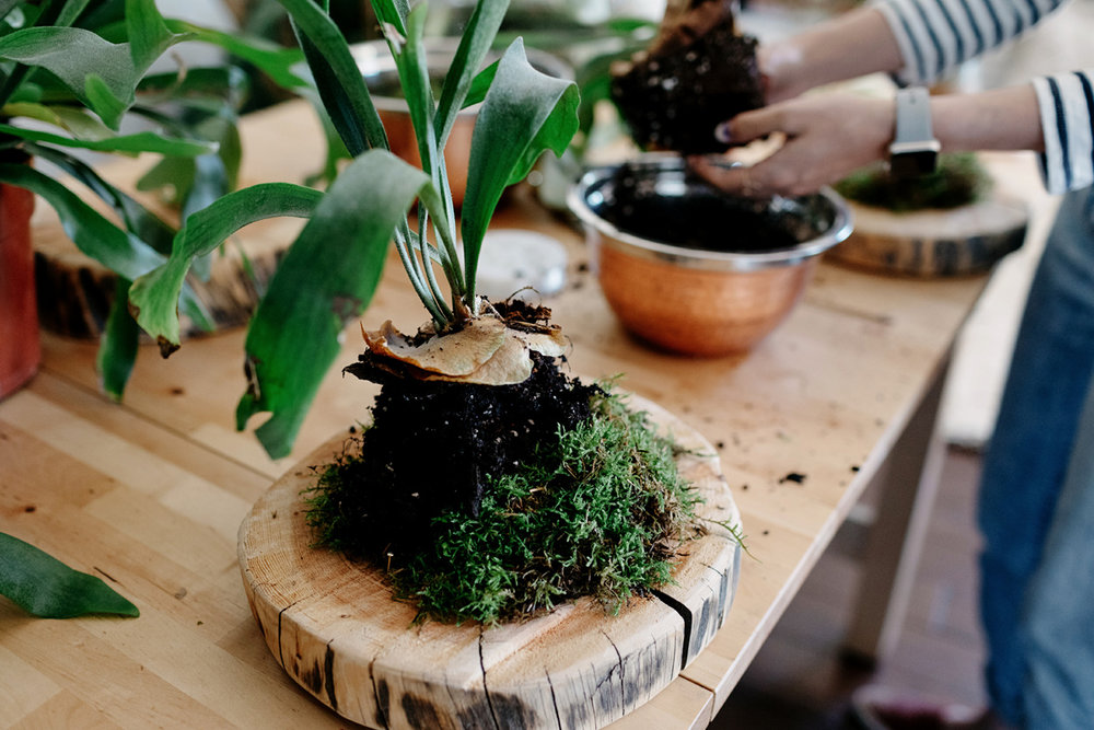 009-staghorn--mounting-a-staghorn--diy--lifestle-blog--interior-design-blog--plant--green-thumb.jpg