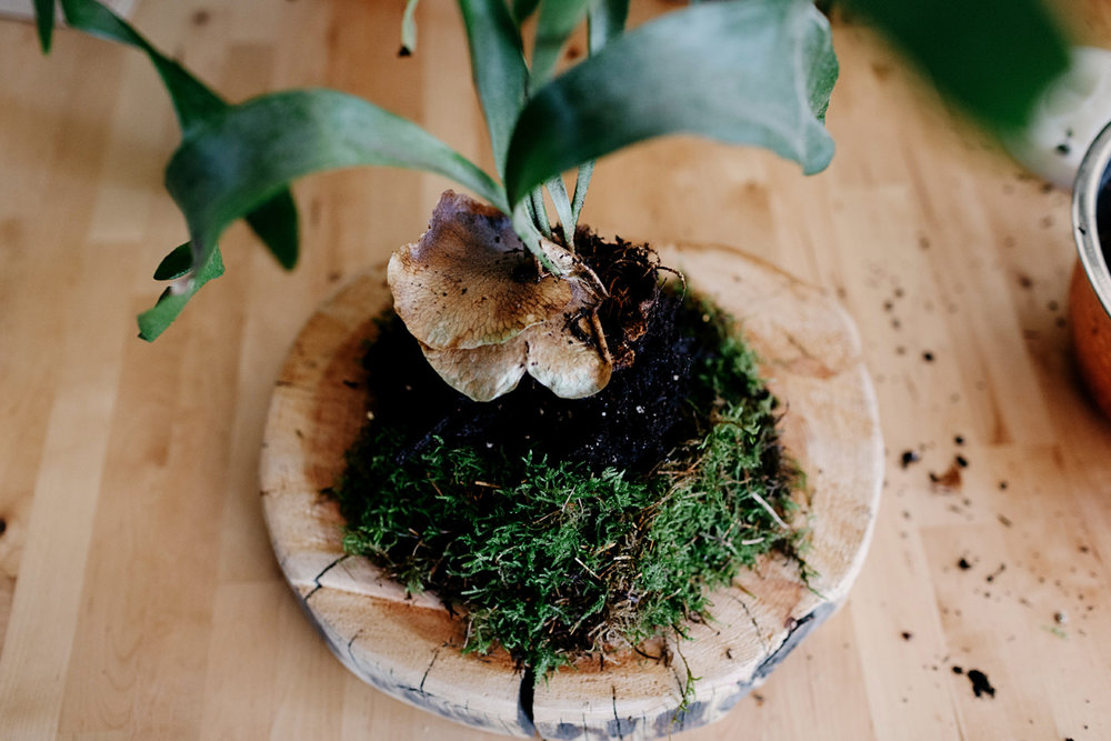 007-staghorn--mounting-a-staghorn--diy--lifestle-blog--interior-design-blog--plant--green-thumb.jpg