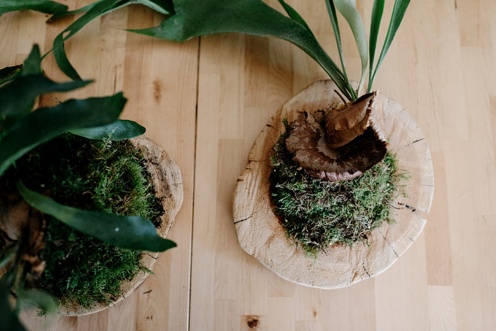013-staghorn--mounting-a-staghorn--diy--lifestle-blog--interior-design-blog--plant--green-thumb.jpg