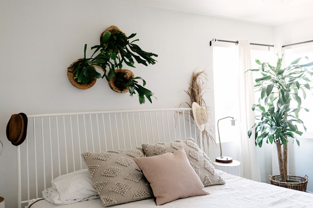 017-staghorn--mounting-a-staghorn--diy--lifestle-blog--interior-design-blog--plant--green-thumb.jpg
