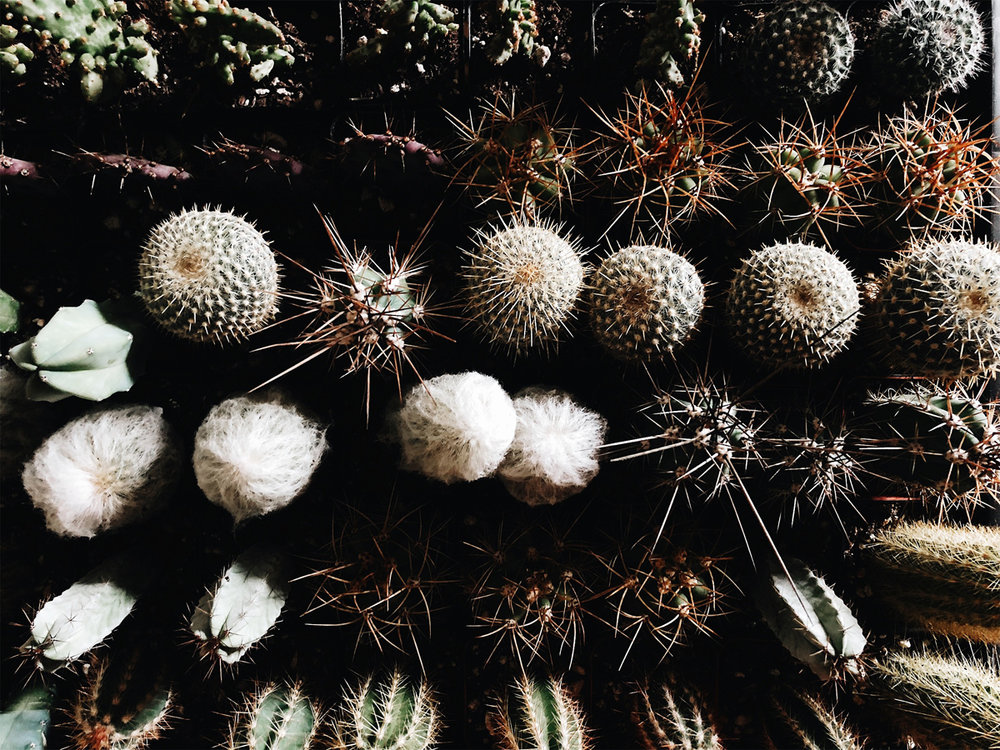 001-plant-shop--albuquerque--cacti--new-mexico--community-over-compitition--lifestlye-blog.jpg