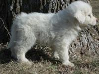 Sally as a puppy.