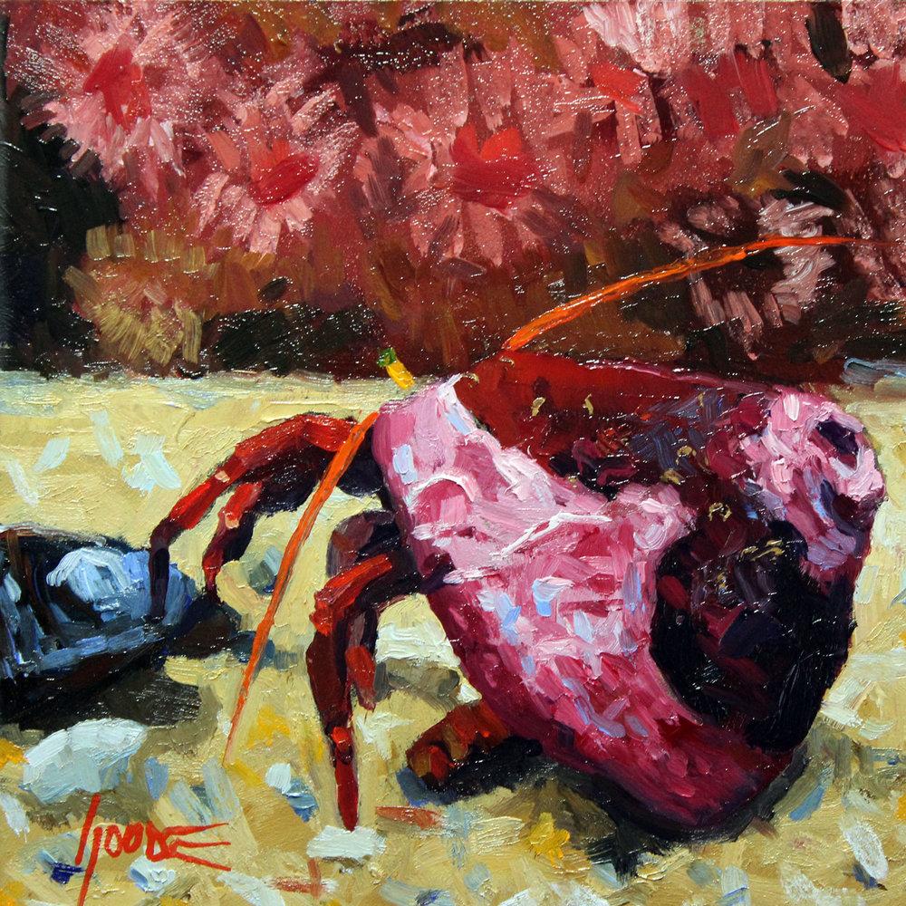 Hermit-Crab-No1.jpg