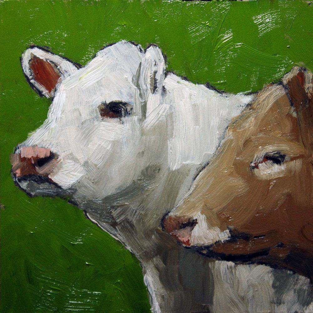 White-Tan-Cows-step1.jpg