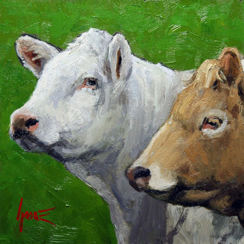 White-Tan-Cows.jpg