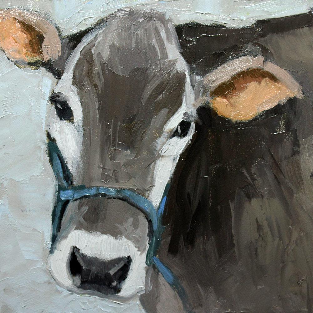 Sweet-Face-Cow-step2.jpg
