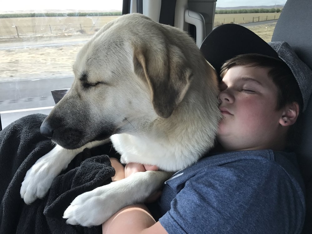 On our way to California, snuggling with her best buddy.