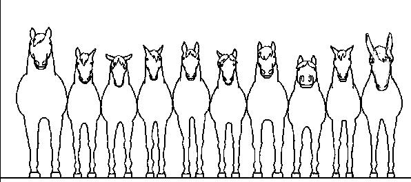 horse-relationships.jpg