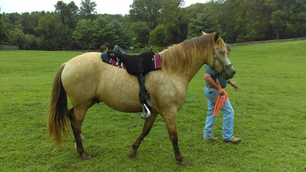 Fits many horses! Buckskin Leo likes it.
