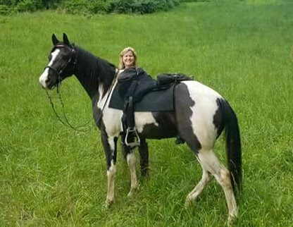 Fits a Tennessee Walking Horse too !