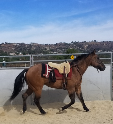 Gunner in a round pen at the Hill Canyon Santa Rosa Park in Camarillo, CA