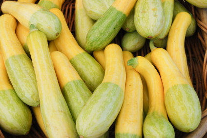 summersquash.jpg