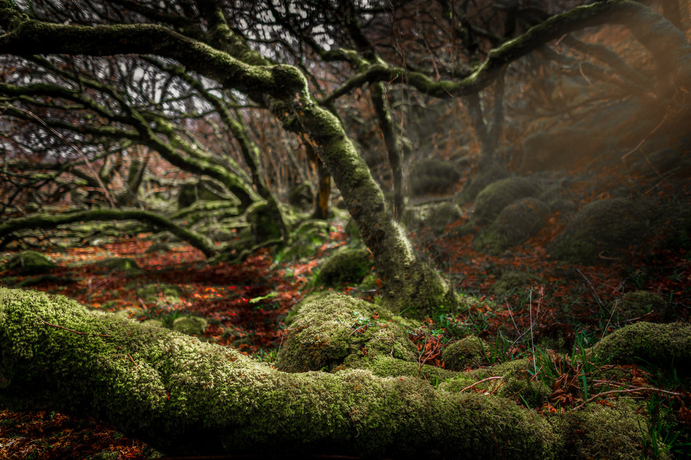 6. Autumn in Nangijala -These beautiful, rich and mystical forests aren't very common in the north where I live. However at Isle of Skye i found several