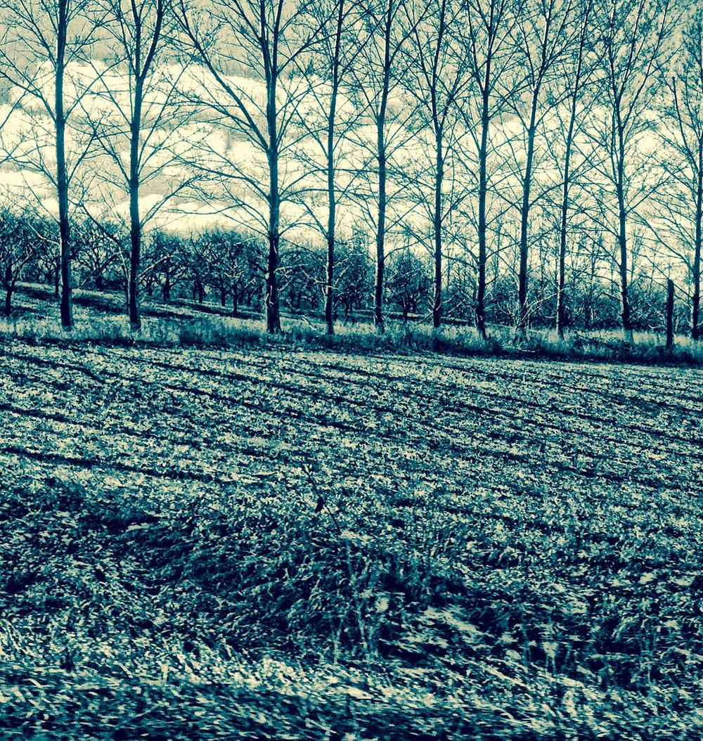 cottonwoods .. traverse city