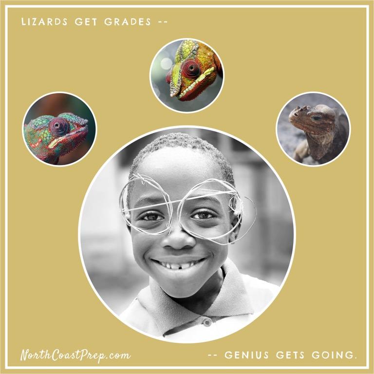 Lizard Book49.jpg