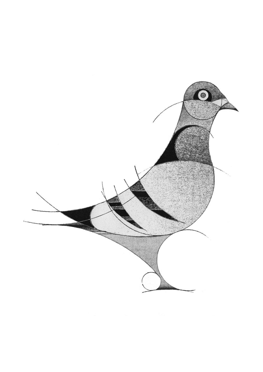 pigeon (2013)