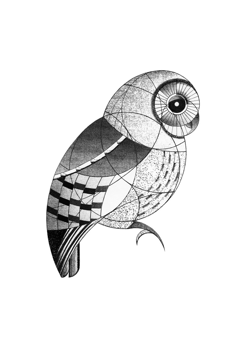 tawny owl (2015)