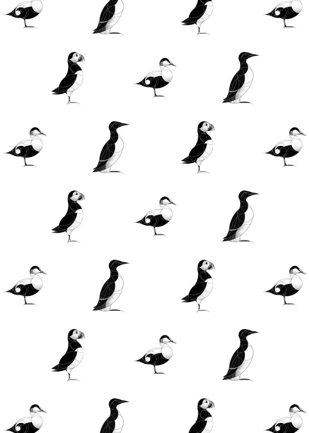 seabirds AOP