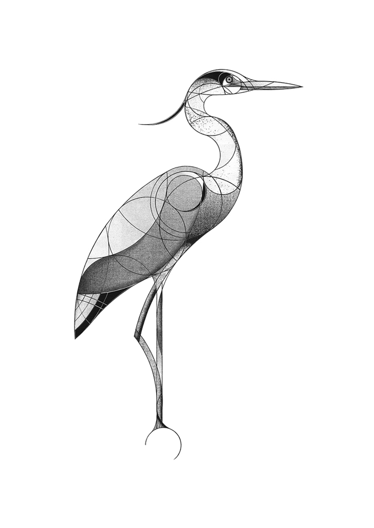 grey heron (2017)