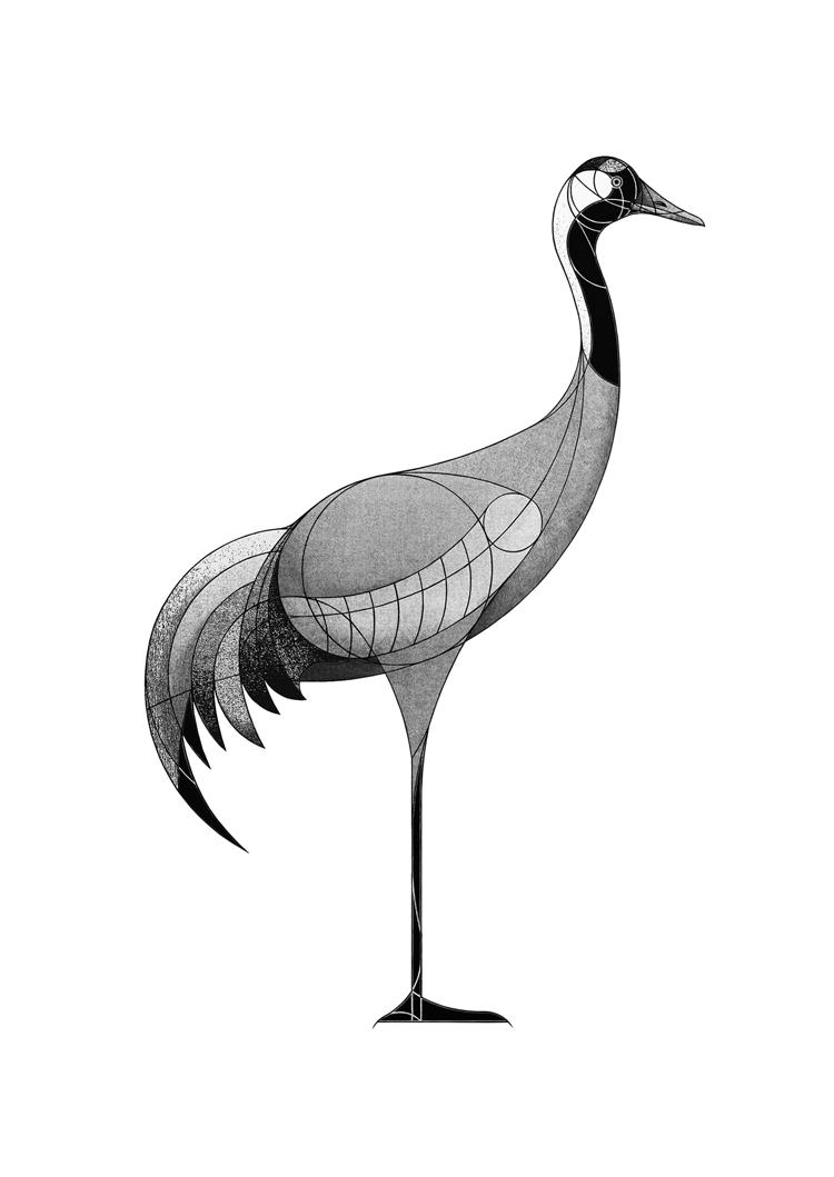 common crane (2018)