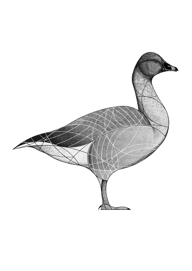 pink-footed goose (2018)