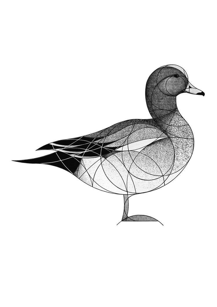 widgeon (2018)