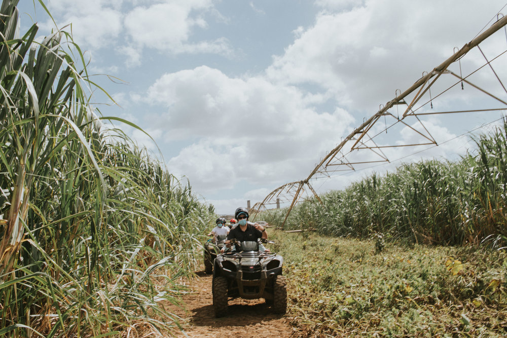 Sugar cane is Mauritius's farming crop. Also used in their local rum.